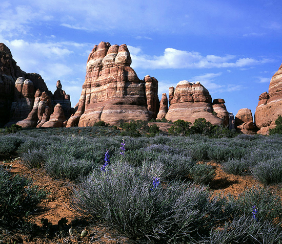 Sandstone Sentinels in the Needles District.