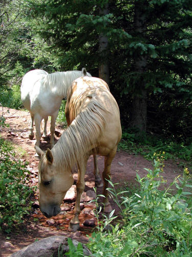 Capitol Creek Trail and Horses