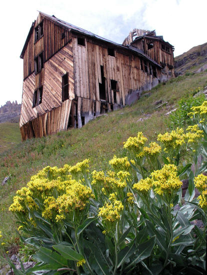 Mountain Top Mine and Yellow Wildflowers