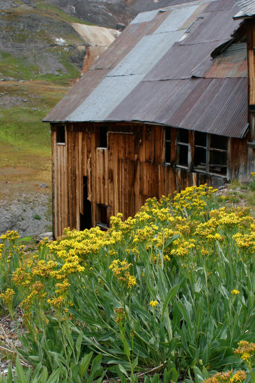 Mountain Top Mine Bunkhouse and Yellow Wildflowers