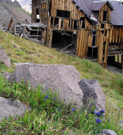 Blue Wildflowers and the Mountain Top Mine Bunkhouse