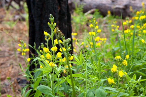 Wildcat Canyon Trail Wildflowers